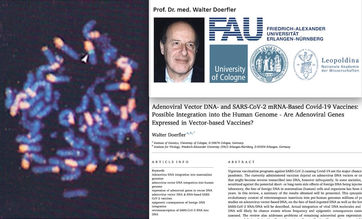 """""""SARS-COV-2 E VACCINI MODIFICANO IL DNA UMANO. Enorme Esperimento sulla Popolazione"""". Studio Incubo di Genetista Tedesco su Science Direct"""